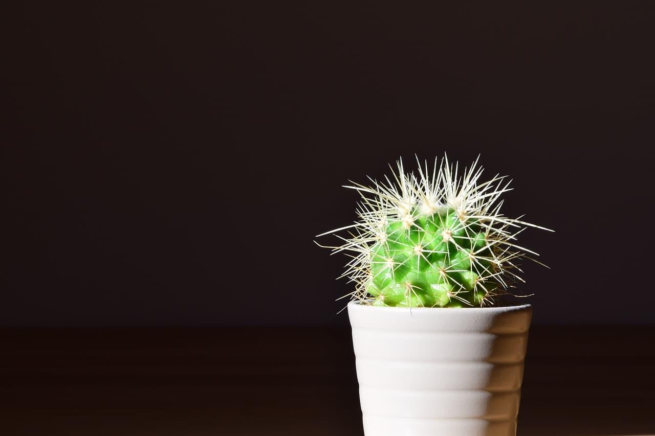 Vibratoren für Männer Kaktus